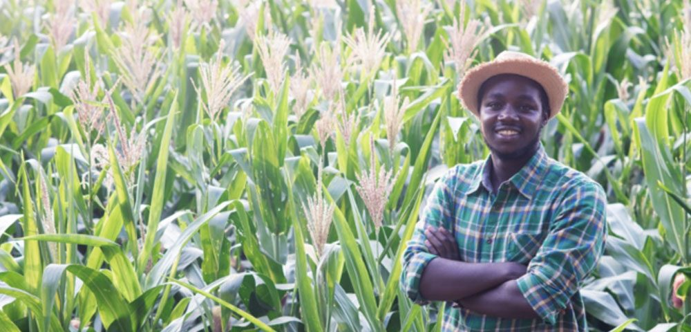 Bringing back Smallholder farmers to the value chain where they belong